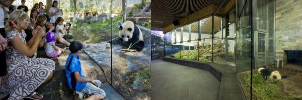 Adelaide Zoo Panda Exhibit