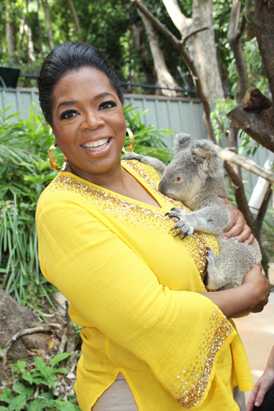 Oprah_koala