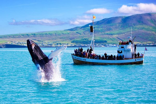 whale watching iceland. Iceland 12 Iceland – the land