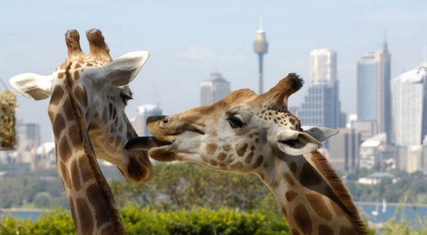 Taronga Zoo is 100 - and its visitors get the presents