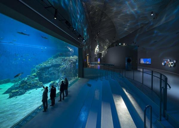 The-Blue-Planet-Aquarium-12