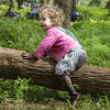 Kids will go wild at the proposed new Wild Play Garden at Centennial Park, Sydney