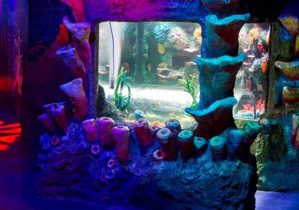 coral-caves SEA LIFE Melbourne Aquarium