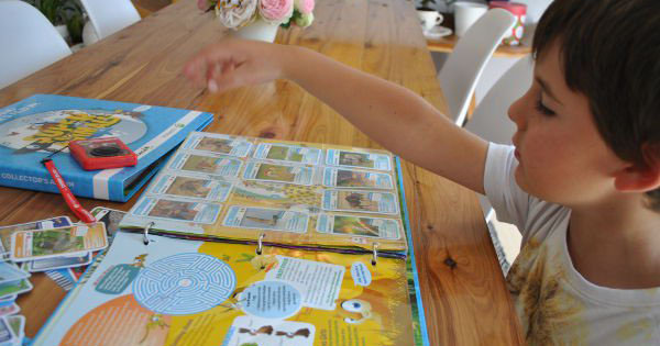 Boy collecting Woolworths Super Animal cards