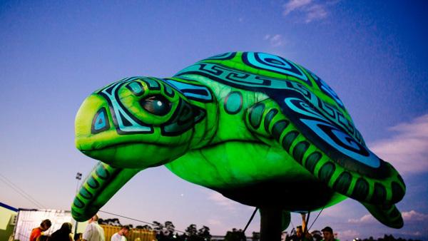 white-night-turtle