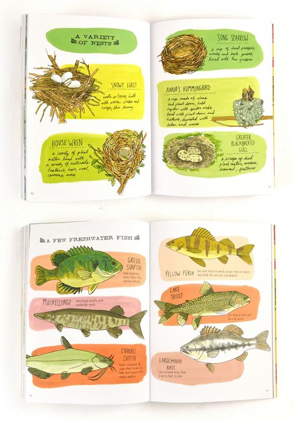 nature-anatomy-julia-rothman-2
