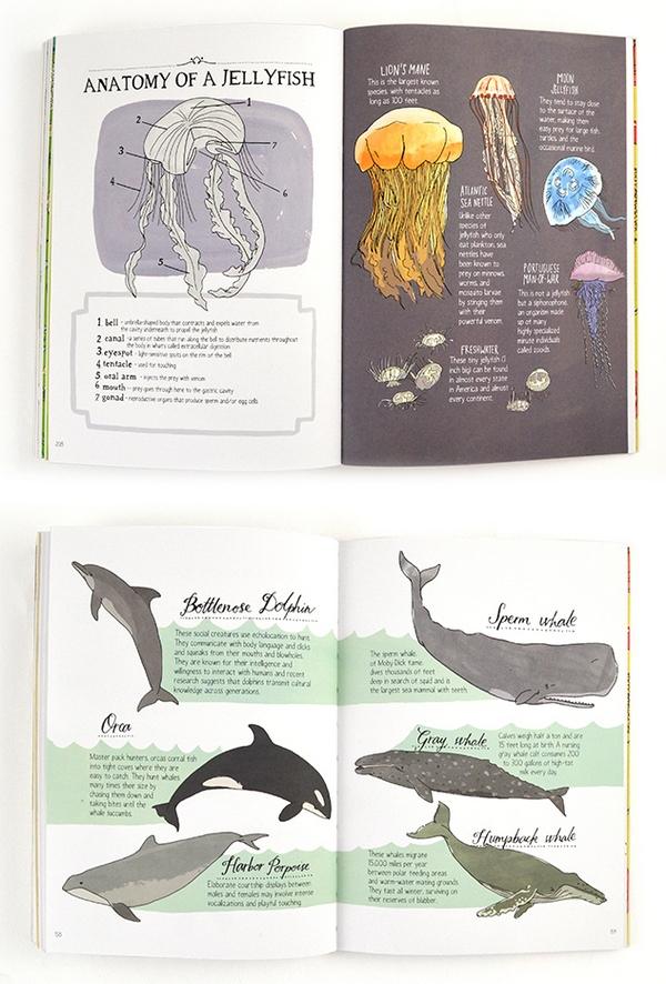 nature-anatomy-julia-rothman-8