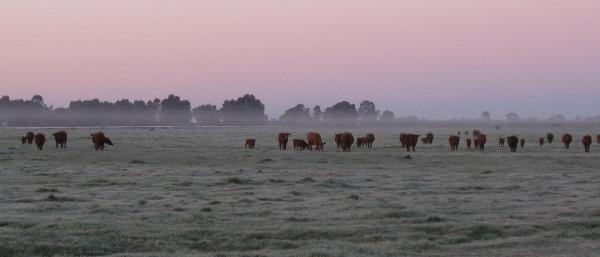 farmbeer6