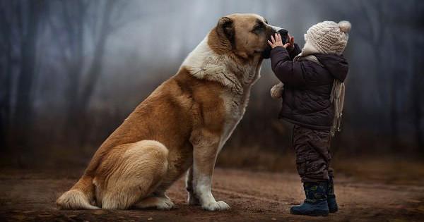 dog-boy-fb