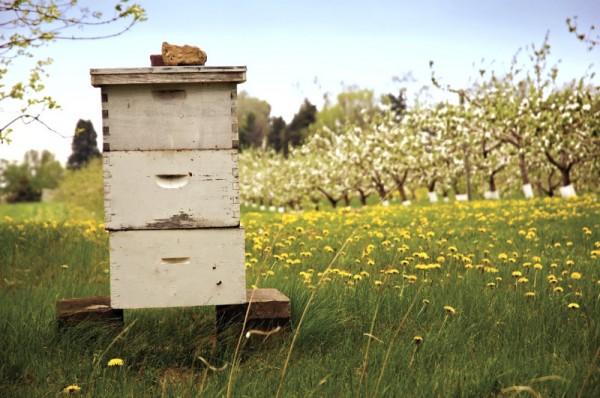 baby shower Burt's Bees