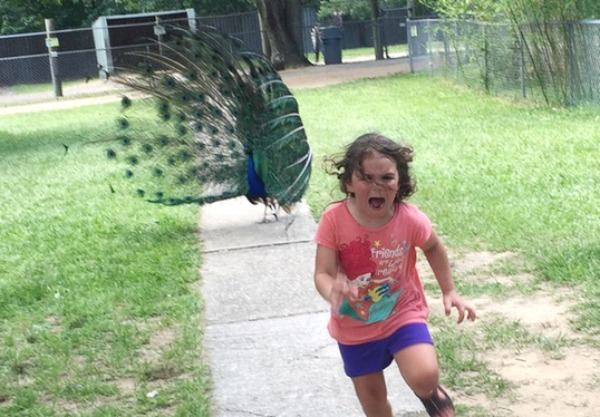 Of his daughter running for her life in fear of the colourful bird