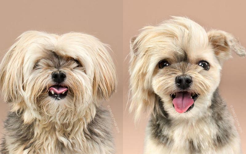 dog makeover 2 rocco