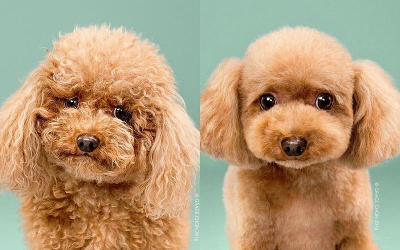 dog makeover 3 biggie