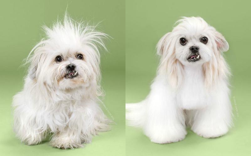 dog makeover 4 lana