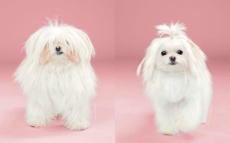 dog makeover1