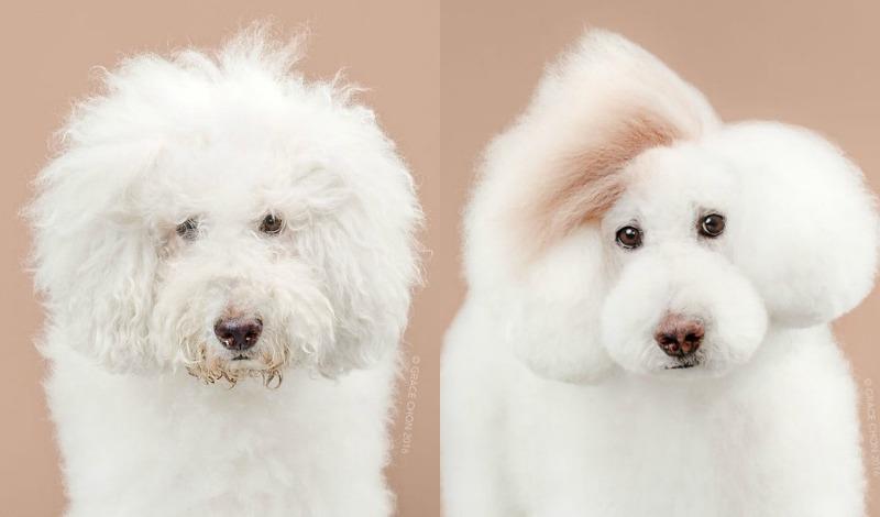 dog makeovers 7 athena
