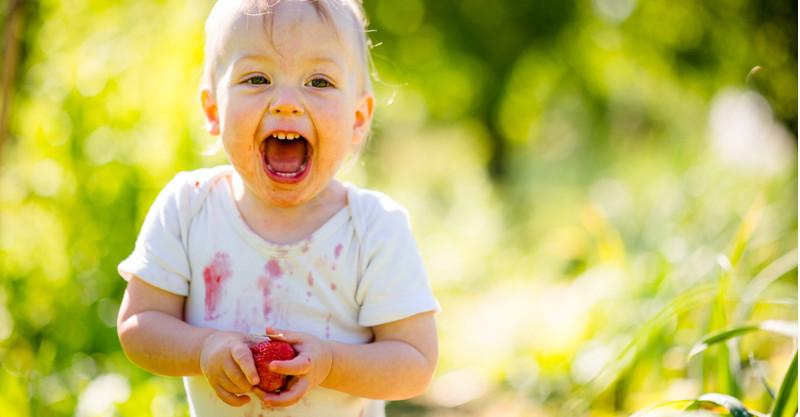 Toddler eating strawberries