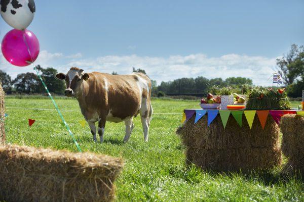 Munchkin - organic vs grass fed