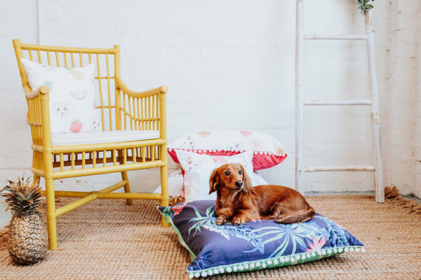 Furry Peach Co pet bed