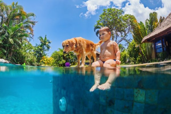 little boy swimming pool dog
