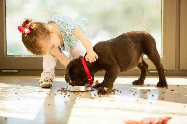 toddler girl feeding dog
