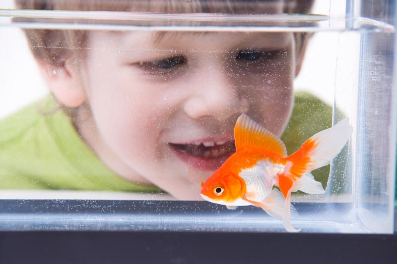 Boy and pet goldfish