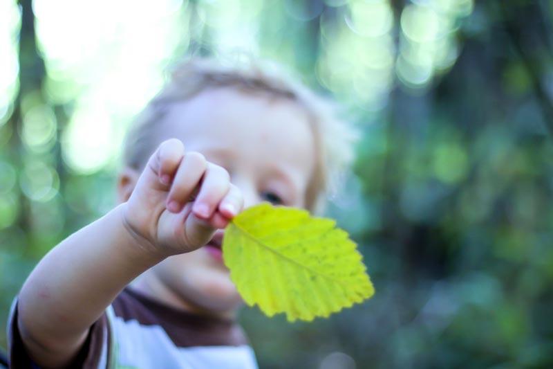 Toddler holding up leaf
