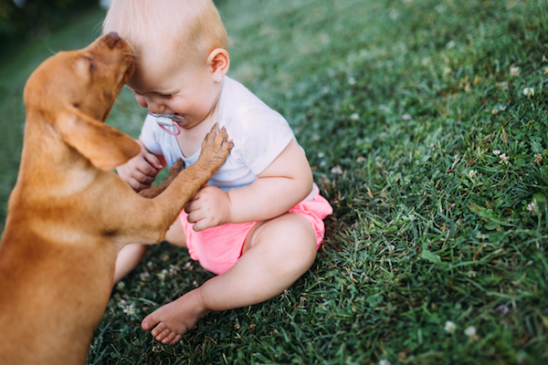 Editorial: Portrait of cute baby playing with dog on lawn