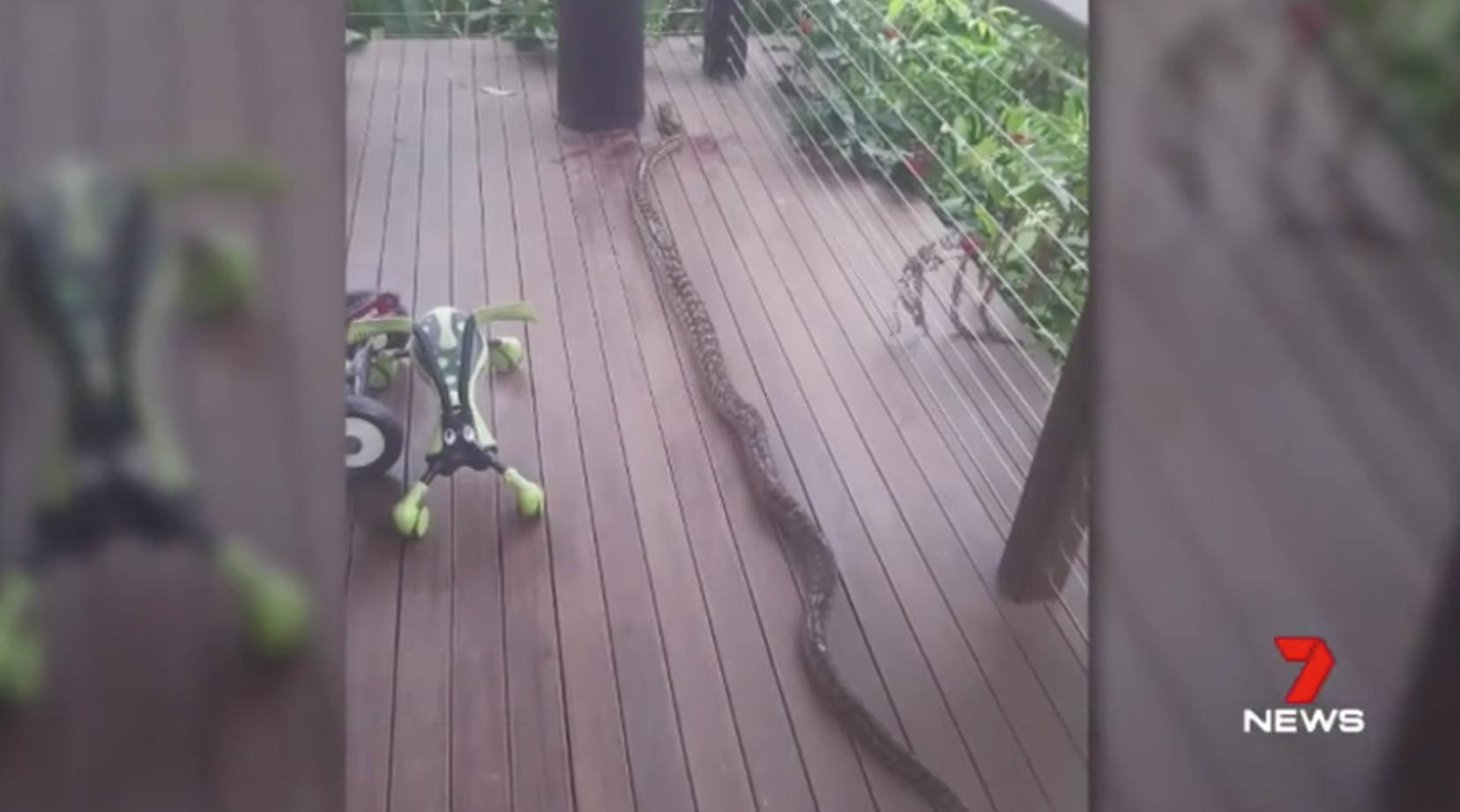 Baby Naish snake bite