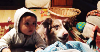 """Mum bribes baby with food to say """"mama"""" … is shocked when dog says it first"""