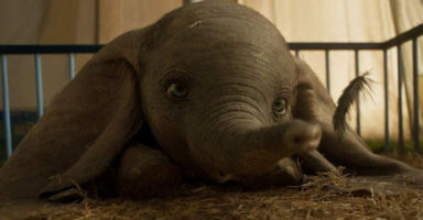 Ugly cry time: The new 'Dumbo' movie trailer is here and we're emotional wrecks