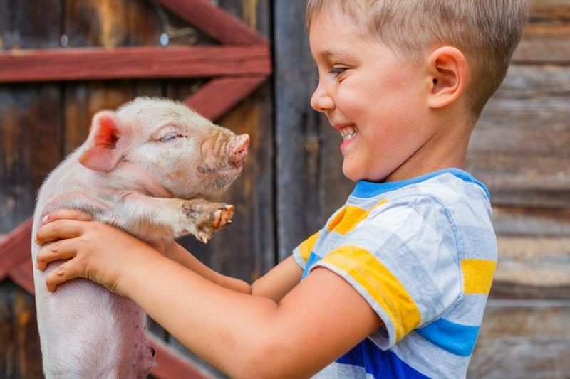 Little boy holding pig