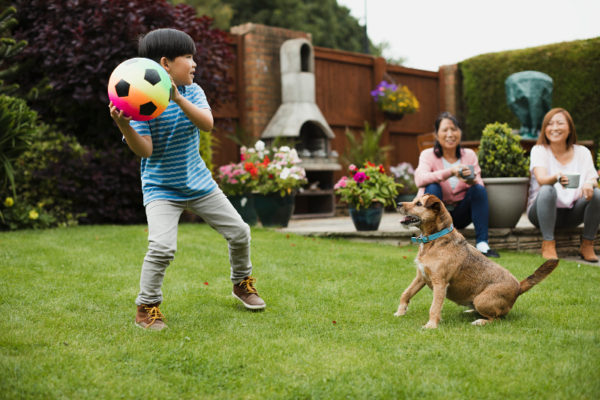 family playing with dog